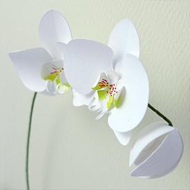 paper orchid birthday card craftgawker