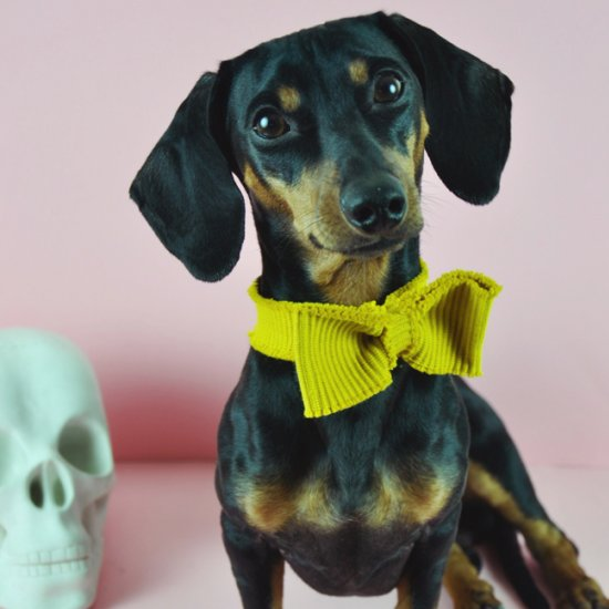 Beautiful Bow Tie Bow Adorable Dog - 317256  Graphic_469285  .jpg