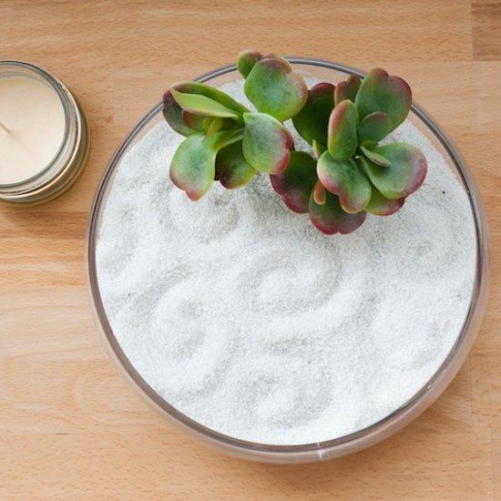 ... DIY Succulent Zen Garden #80120 Ensooter Make Your Own ...