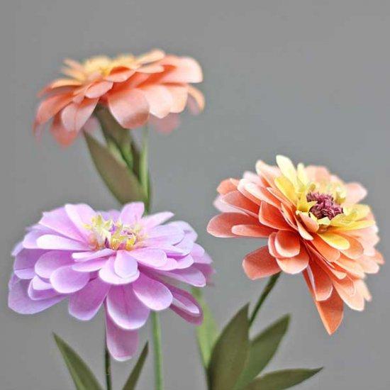 Paper zinnias flower