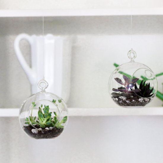 Floating Terrariums