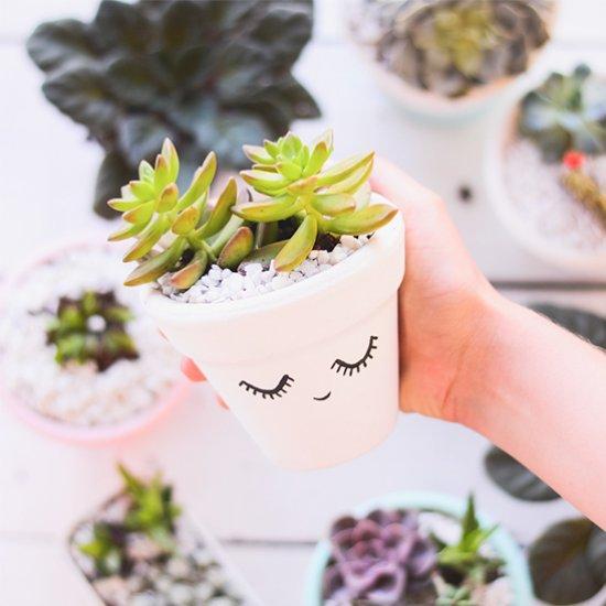 DIY Decorated Succulent Pots