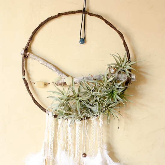 Dreamcatchers Air Plants Craftgawker Delectable How To Make Authentic Dream Catchers