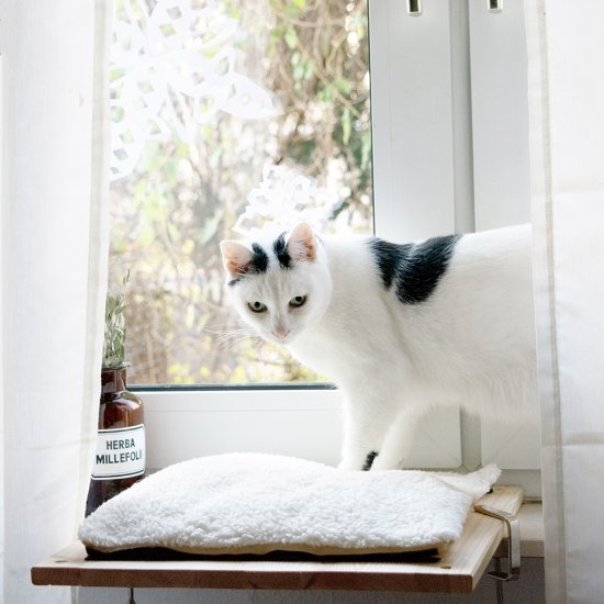 DIY cat bed for your windowsill