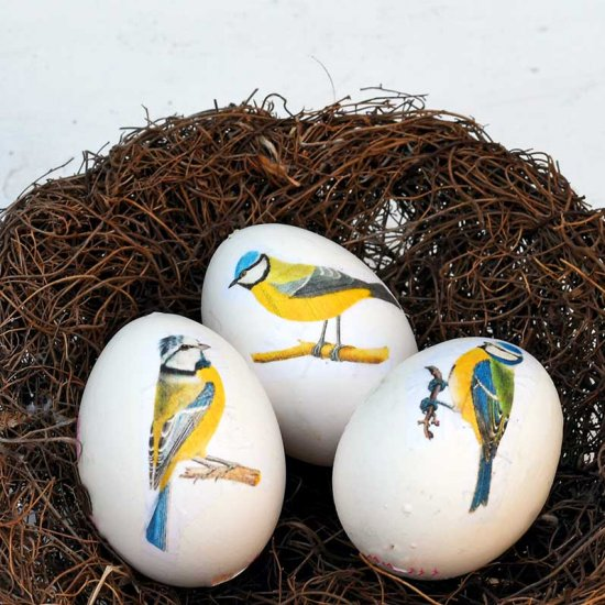 Blue tit egg wreath